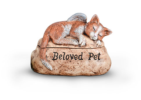 Beloved Pet - Cat Image